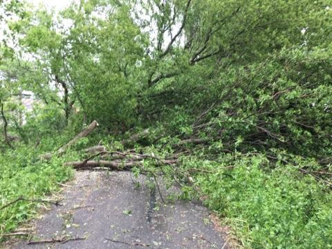 Long Prairie Trail Damage